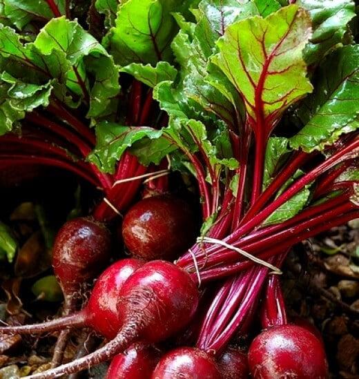 Beetroot - Vegetable garden , Healthiest vegetable plants