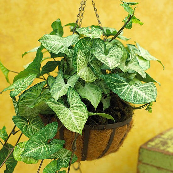 how to grow indoor plants from leaves