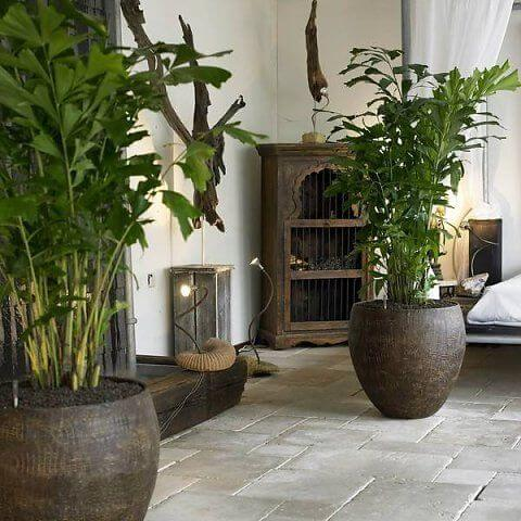 Fishtail palm - Indoor House Plants