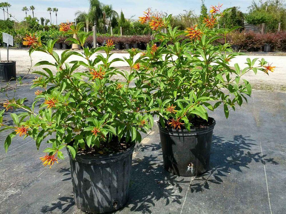 Garden Bush: Flowering Plants, House Plants